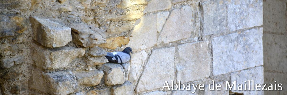 Maillezais pigeon