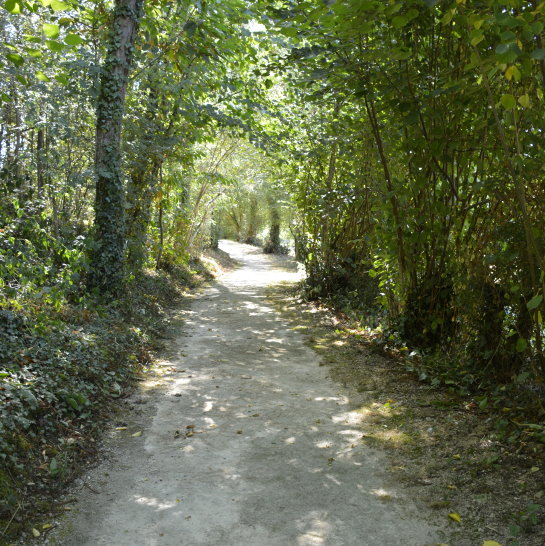 Wooded path to the Chapelle de la Brossardiere