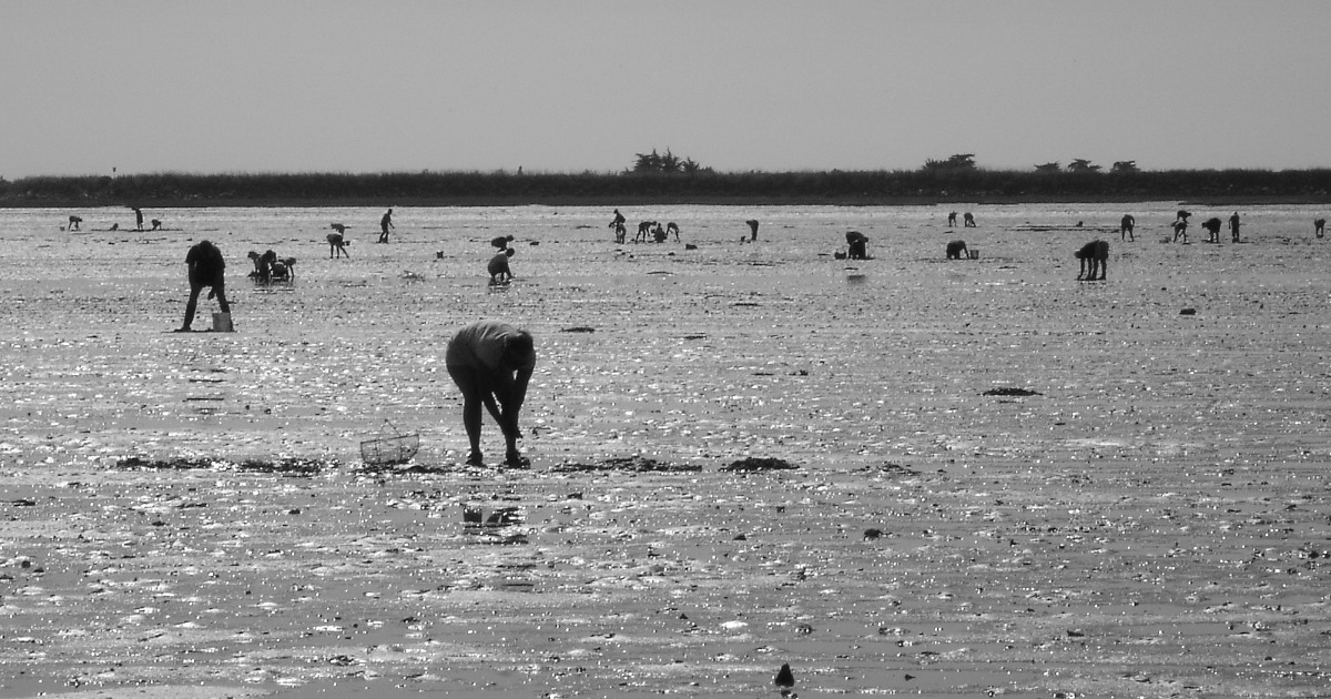 peche a pied hand gathering footfishing vendee