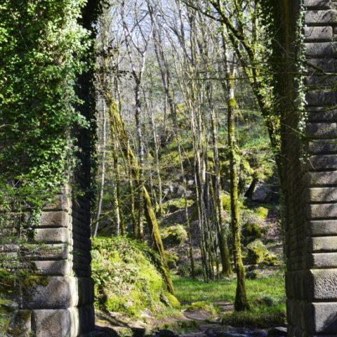 Pont de Deluge dans le Massif Forestier de Mervent-Vouvant