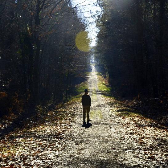 Winter walks through Mervent Forest in Vendee